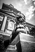 Mcmicken Hall Prints - University of Cincinnati Lion Black and White Picture Print by Paul Velgos