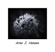 Arne Hansen - Untitled 605