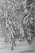 Fir Trees Drawings - Untouched Silence by Khromykh Natalia