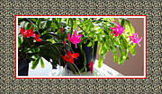 Easter Cactus Art Framed Prints - Unusual Simultaneous Bloomers 4 Framed Print by Barbara Griffin