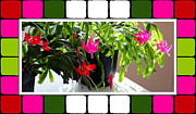 Easter Cactus Art Framed Prints - Unusual Simultaneous Bloomers 5 Framed Print by Barbara Griffin