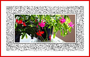 Easter Cactus Art Posters - Unusual Simultaneous Bloomers Poster by Barbara Griffin