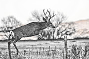 Mule Deer Buck Photograph Photos - Up and Over by Jim Garrison