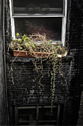 Window Sill Photo Posters - Upkeep Poster by Margie Hurwich