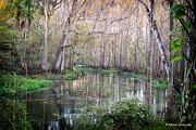 Barbara Bowen - Upper Hillsborough River