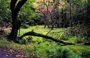 Lush Vegetation Prints - Upstanding and Fallen. Glendalough. Ireland Print by Jenny Rainbow