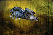 Ural Posters - Ura Owl in the Woods Poster by Bev  Brown