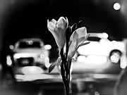 Streetphotography Prints - Urban Flowers No 1 Print by Oliver Stahmann