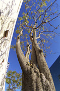 Fine Photography Art Prints - Urban Trees No 1 Print by Ben and Raisa Gertsberg