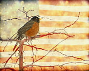 Flag Of Usa Prints - USA American Robin Print by James Bo Insogna