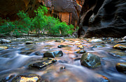 Utah National Parks Prints - Utah - Virgin River 5 Print by Terry Elniski