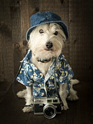 Portrait Photo Posters - Vacation Dog Poster by Edward Fielding