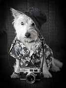 Dressed Photo Framed Prints - Vacation Dog with camera and Hawaiian shirt Framed Print by Edward Fielding