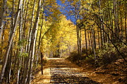 Aspen Trees Prints - Vail Colorado Fall Bike path Print by Michael J Bauer