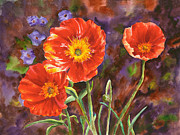 Barb Capeletti - Vail Poppies