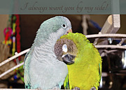 Quaker Parrot Photos - Valentine Card 5 by Nicole Rodriguez