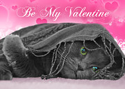 Holiday Cards Photos - Valentine Cat by Joann Vitali