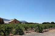 Vineyard Photos - Valley of The Moon Winery In The Sonoma California Wine Country 5D24486 by Wingsdomain Art and Photography