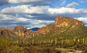The Superstitions Prints - Valley of the Saguaro Print by Saija  Lehtonen