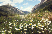 Sandra Cunningham - Valley of wild flowers in the Rocky Mountains