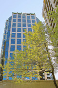 Branches - Vancouver Silhouettes No 1 by Ben and Raisa Gertsberg