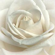 Vanilla Frosting Print by Darlene Kwiatkowski