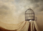 Bird Cage Posters - Vanishing Act Poster by Amy Weiss