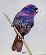 Sandra Maddox - Varied Bunting