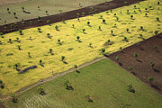 Agronomy Prints - Varied Fields And Planting In Los Print by Steve Brockett