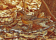 Feathered Creature Framed Prints - Varied Thrush Framed Print by Sandy Keeton
