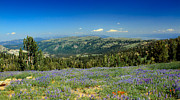 Haybales Art - Vast View And Lupine by Robert Bales