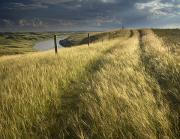 Featured Posters - Vehicle Tracks Across Field And Red Poster by Scott Dimond