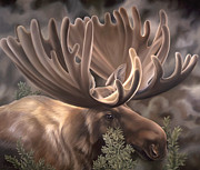 Montana Wildlife Paintings - Velvet by Laura Regan