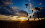 Palm Pyrography Posters - Venice Beach Sunset Poster by Eric Pelletier
