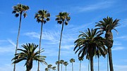 Venice Beach Palms Prints - Venice Palms Print by Wallace Bridges