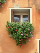 Italy Mixed Media Framed Prints - Venice Shutters Flowers Orange Wall Framed Print by Robyn Saunders