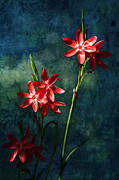 Blooming Digital Art - Vermilion Flowers by Belinda Greb
