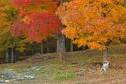 Charles Kozierok - Vermont Autumn Cliche