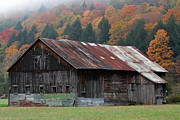 Maple Photographs Framed Prints - Vermont Barn and Fall Foliage   Framed Print by Juergen Roth