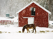 Horse Barn Framed Prints - Vermont Christmas Eve Snowstorm Framed Print by Edward Fielding