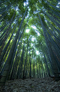 Vertical Bamboo Forest Print by Aaron S Bedell