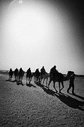 Camel Photo Framed Prints - vertical hot sun beating down on sands and camel train in the sahara desert at Douz Tunisia Framed Print by Joe Fox