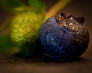 Blueberry Art - Very Blueberry 4x5 option by Patricia Bainter