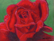 Arlene Crafton - Very Red Rose