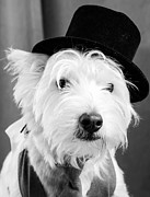 Dog Photo Photos - Veteran Vaudeville Stage Actor by Edward Fielding