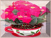 Christmas Season Images Posters - VFL Cup of CHRISTMAS Poinsettia Poster by The Plant Gallery USA Gallery