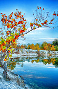 Fall Leaves Prints - Vibrant Klondike Autumn Print by Bill Tiepelman