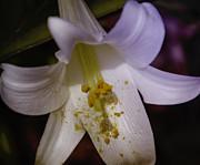 Judy Hall-Folde - Vibrant Lily