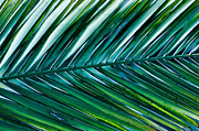 Vibrant Palm Print by Don Schwartz