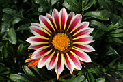 Janaye Book - Vibrant Striped Flower